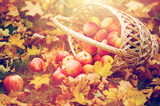 wicker basket of ripe red apples at autumn garden - 172417889