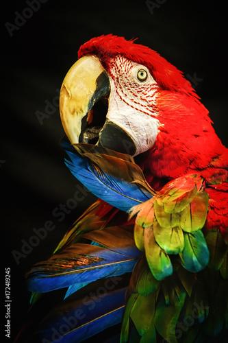 Aluminium Papegaai Scarlet Macaw