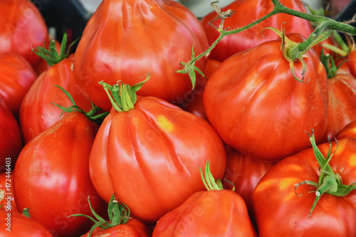 Foto op Canvas Liguria Fresh garden tomatoes at the market. Solanum lycopersicum Liguria