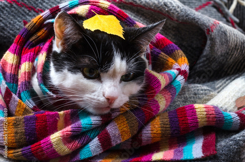 Cat wrapped in warm scarf and autumn leaves. Poster