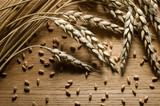 Wheat ears - 172484604