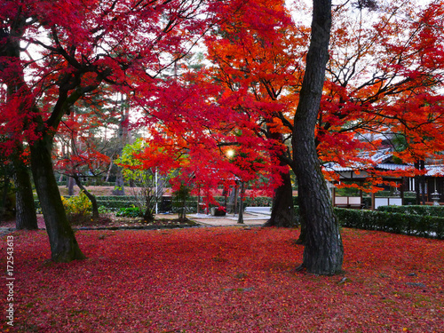 Foto op Canvas Bordeaux Fall of ancient capital of Japan