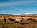 Herd of Horses in Front of Colorado's Rocky Mountain Front Range