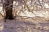 Tree trunk in snowy park, winter nature background