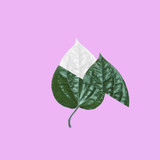 Fototapety Creative minimal tropical Green Leaf on pink background. Flat lay. minimal idea concept.