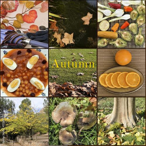 Foto op Plexiglas Herfst Nueve escenas de otoño. Representación de nueve clásicos en la temporada de otoño.