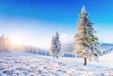 Mysterious winter landscape majestic mountains in winter. Magical winter snow covered tree. Winter road in the mountains. In anticipation of the holiday. Dramatic wintry scene. Carpathian. Ukraine. - 172622850