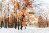 October mountain beech forest with first winter snow - 172622890