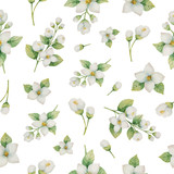 Watercolor vector seamless pattern of flowers and branches Jasmine isolated on a white background. - 172636635