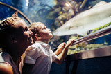 Mother and son watching sea life in oceanarium - 172639450