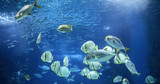 Picture of group of fish swimming underwater - 172639486