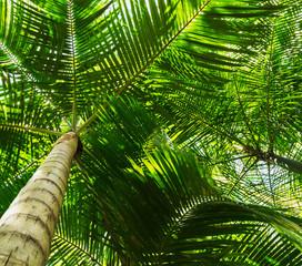 Fundo com folhas de palmeira.