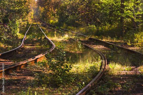 Path to autumn. Fall landscape with railways in deep forest Poster