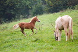 Foal with her mother - 172669240