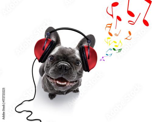 Fototapeta dog listening to music