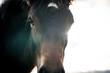 Horses on a sunny day - 172727849