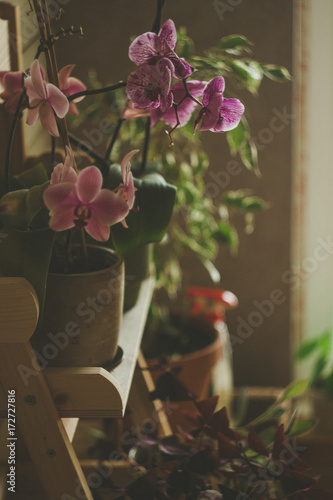 Beautiful pink flowers in vintage flowerpot on the wooden shelves