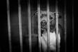 chien abandonné en refuge - 172731210
