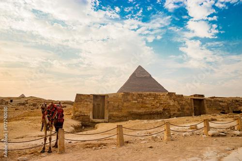 Camel near ruins of pyramid in Cairo, Egypt