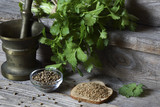 Coriander - ground, grains and green leaves - 172751848