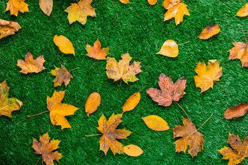 various autumn leaves on green grass.
