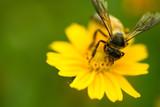 Bee pollen - 172783297