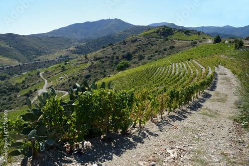 Aluminium Wijngaard Vignoble de Collioure