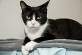 Curious Cat Stare