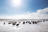 landscape of pasture with white snow - 172805001