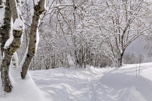 Keuken foto achterwand Weg in bos chemin tracé dans la neige dans la forêt