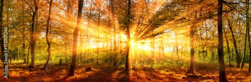 Herbstlandschaft Panorama: Wald mit goldenen Sonnenstrahlen