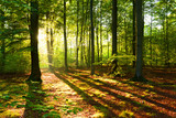 Morning in the forest - 172839659