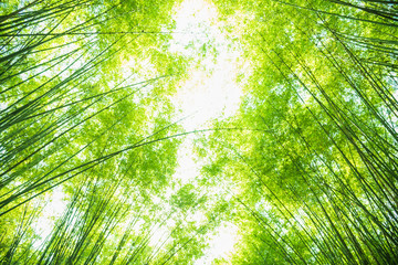 green bamboo leaves for background