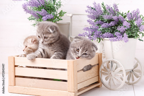 Aluminium Kat Kittens in a wooden box. Lavender flowers in the background