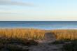 Beautiful serene beach scene with grass and lake