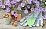 fleurs d'aster au dessus d'accessoires de jardinage