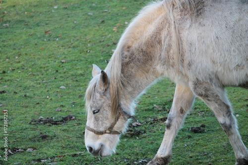 Aluminium Kangoeroe horse