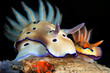 Beautiful view of nudibranch in night dive