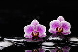 still life with two pink orchid and black stones