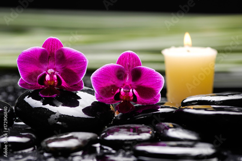 Poster Spa Still life with red two orchid with stones,candle and green plant