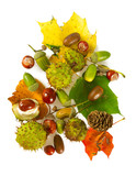 Acorns and chestnuts isolated on white - 172921697