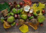 Acorns and chestnuts on wooden rustic table - 172922235