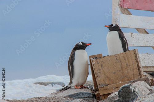 Fotobehang Pinguin Penguin in a Box