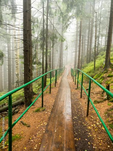 Fotobehang Weg in bos Formy skalne i labirynty Szczelińca Wielkiego najwyższego szczytu Gór Stołowych