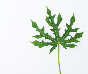 Flat lay green leaf pattern on white background,Chaya tree,Tree spinach
