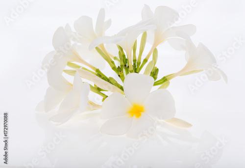 Fotobehang Plumeria Plumeria or Frangipani spa flowers on white background
