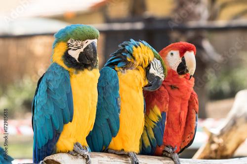 Aluminium Papegaai Macaws