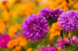 colorful fall flowers background