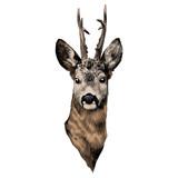 deer sketch vector graphics head colored drawing - 172994857