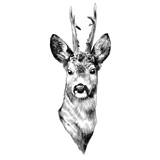 deer sketch vector graphics head black-and-white monochrome pattern - 172995007